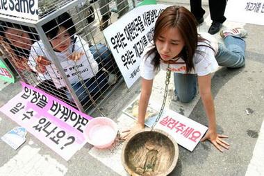 韩国动物保护者呼吁反对吃狗肉